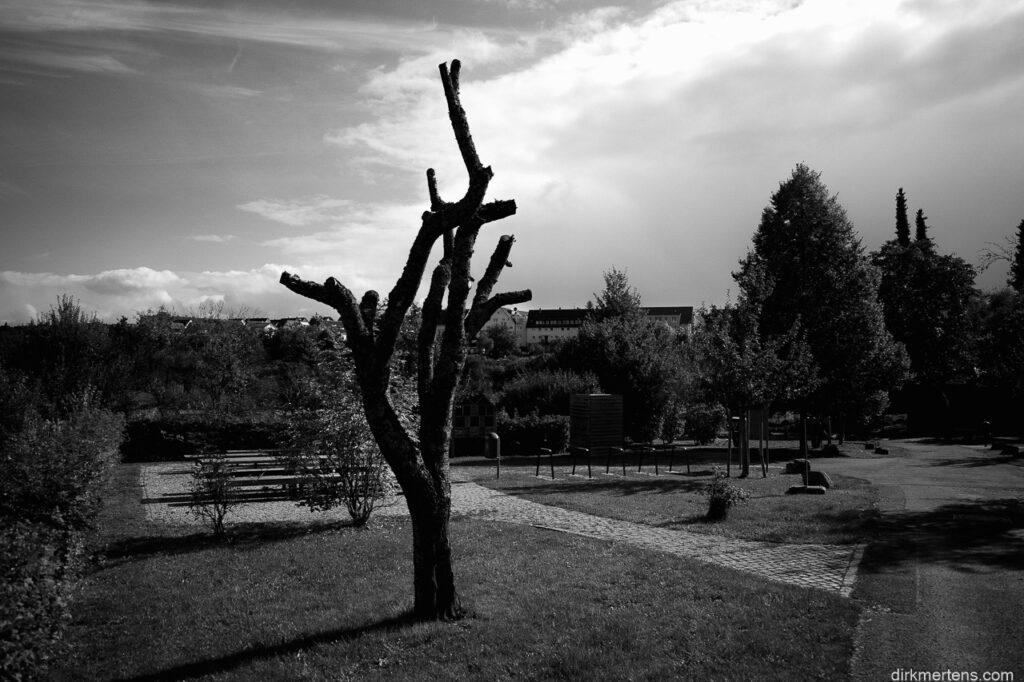 not a joshua treee